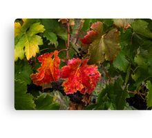 Red and Green Vines Canvas Print