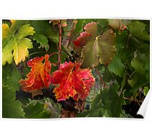 Red and Green Vines Poster