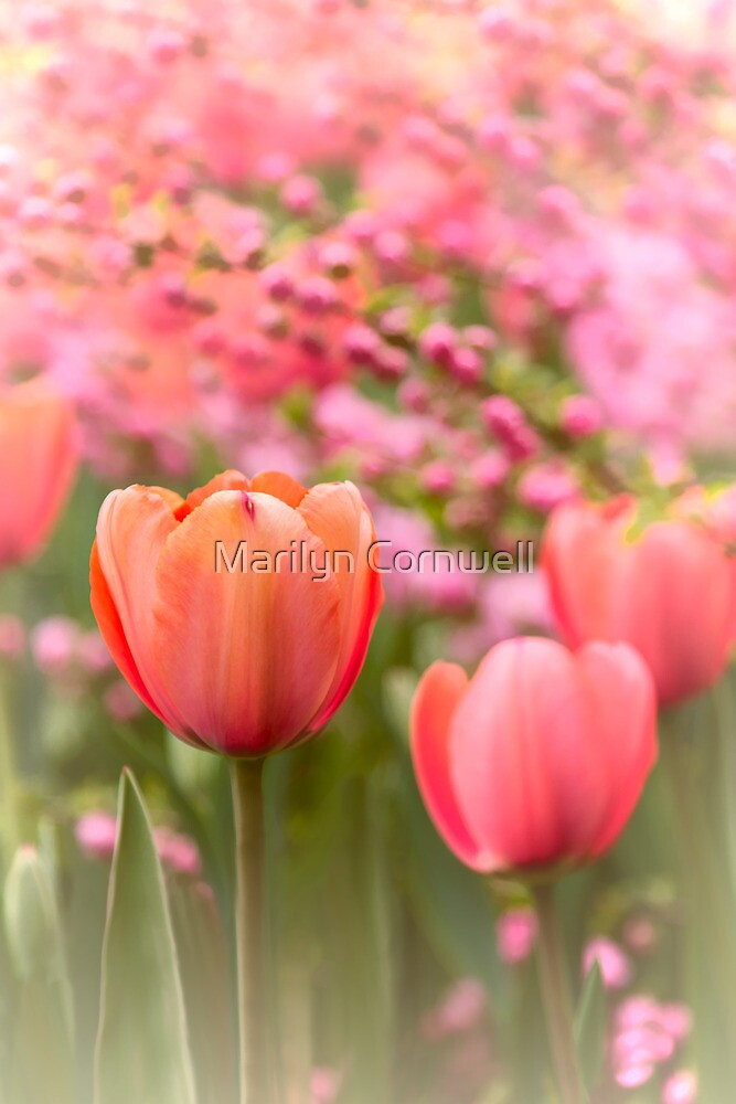 Spring Froth by Marilyn Cornwell