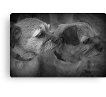 Border Terriers Canvas Print