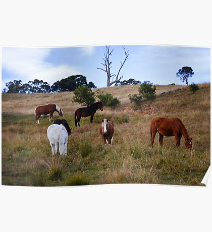 Equines Poster