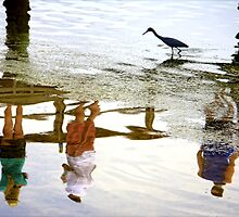 Bird Watching Reflection by Mikell Herrick