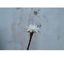 Flower of Cactus Photographic Print