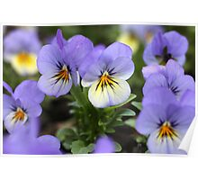 Lavender Faces With Yellow Highlights Poster