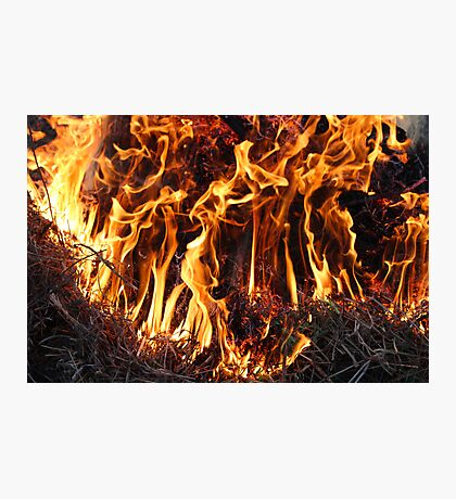 Fire in the forest Photographic Print