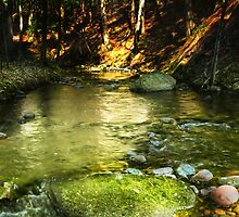 Trout Stream Deep in the Woods by Nazareth