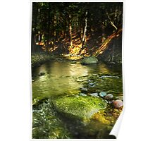 Trout Stream Deep in the Woods Poster