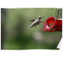 Hummingbird Photographs Poster