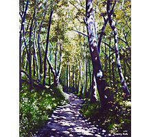 'Summer Woods (Moses Cone State Park, NC)' Photographic Print