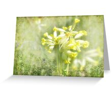 Fairy Cups (Cowslips) Greeting Card