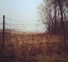 wire by Stefan Albani