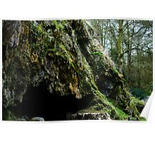 Mossy cave Poster