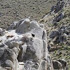 """Sophie on the rocks"",Peterson Mountain,Reno NV USA by Anthony & Nancy  Leake"