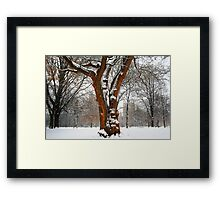 """Central Park in """"Old Louisville"""" - Mystical Tree Framed Print"""