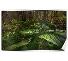 Skunk Cabbage Front and Center Poster