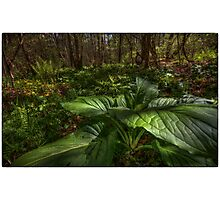 Skunk Cabbage Front and Center Photographic Print