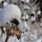 A Snowy Burden by Kathleen Daley