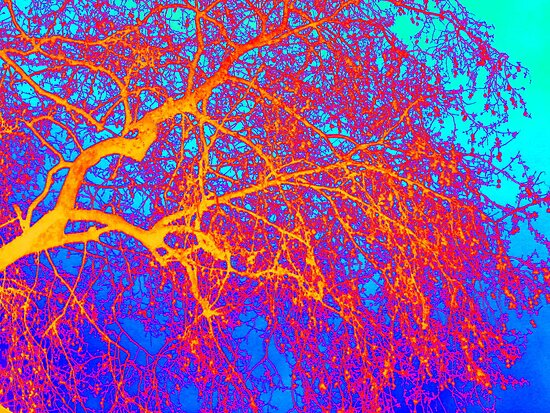 branches- colourful image taken in London by cathyjacobs