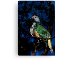 Rose Crowned Fruit Dove Canvas Print