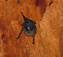 Bat inside a tree by kokitico