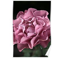 Frilly Rose Poster