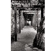 Vine Covered Path Photographic Print