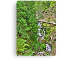 no name creek Canvas Print