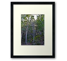 hillside forest Framed Print