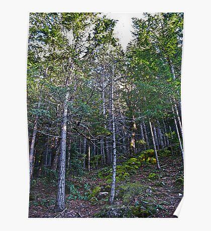 hillside forest Poster