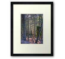 sun stream Framed Print
