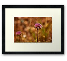 Purple Pilbara Flower Framed Print