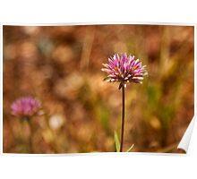 Purple Pilbara Flower Poster