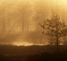 16.5.2013: Spring Morning III by Petri Volanen