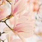 Magnolias by Iris Lehnhardt