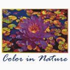 Color in Nature by Nira Dabush