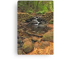 shy brook Canvas Print