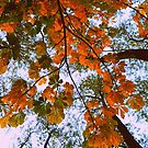Leaves in fall by Amy McCabe