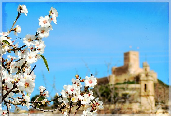 castle with almonds flowers by dedakota