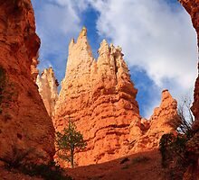 Hoodoo Spire, Bryce Canyon National Park by DArthurBrown