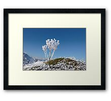 frosty snow covered ditch with weeds Framed Print