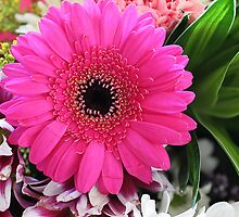 Pink Gerbera by Laura  Cutts