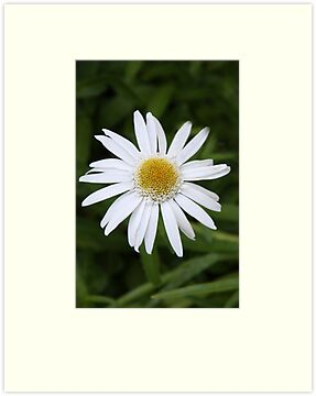 Daisy Solitaire by heatherfriedman