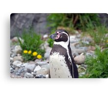 Penguin lookout Canvas Print