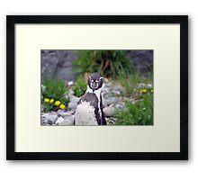 Penguin spotted me Framed Print