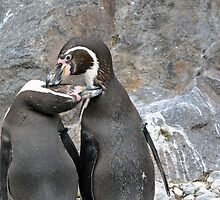 Penguin love by Madsen1981