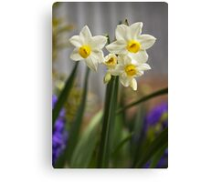 Potted Narcissi  Canvas Print
