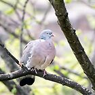 Pigeon in tree by Madsen1981