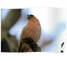 Sparrow in tree singing Poster