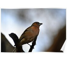 Sparrow in tree Poster