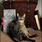 Does this pose make me look fat???  by Dawn M. Becker